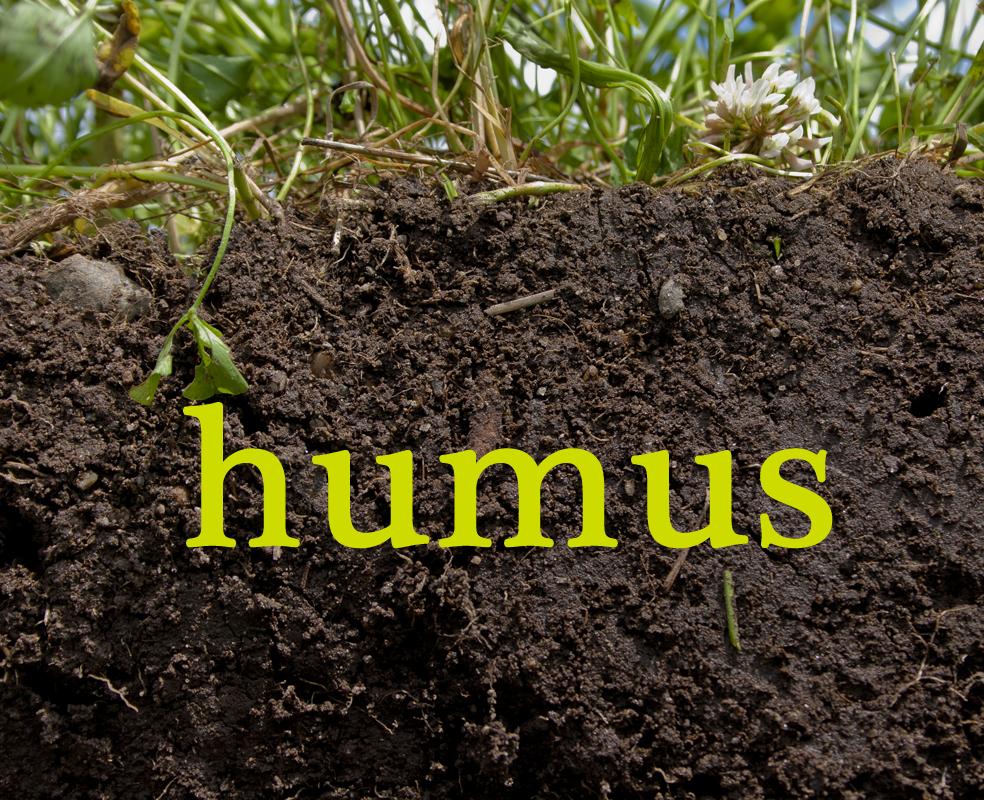 h_humus